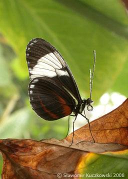 Tropikalne motyle w motylarni